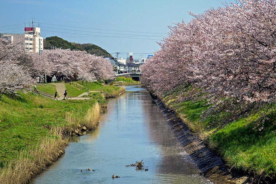 2014.04-近所の桜3